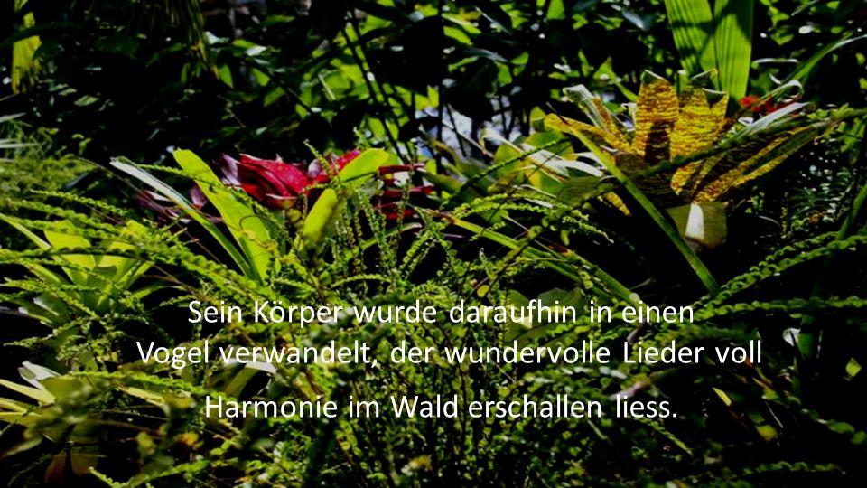 Sein Körper wurde daraufhin in einen Vogel verwandelt, der wundervolle Lieder voll Harmonie im Wald erschallen liess.
