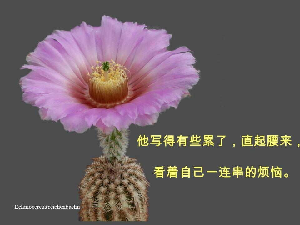 Echinocereus klapperi 和妻子的关系越来越冷淡、 孩子不听话、 上个月谈生意不顺利 ……