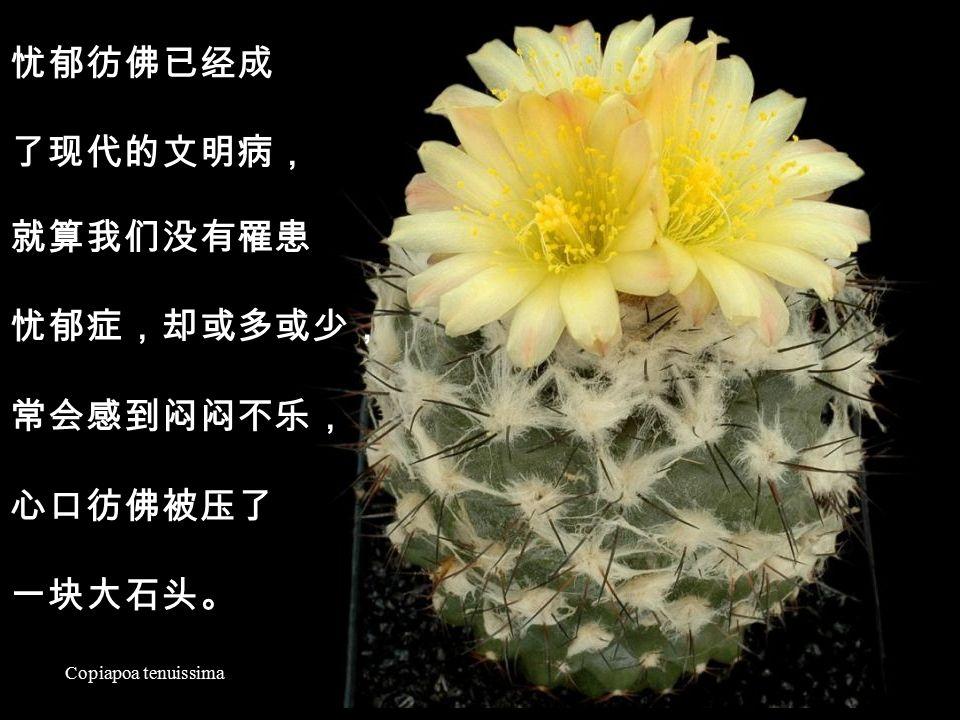 Mammillaria slevinii ~ 心的体验 ~