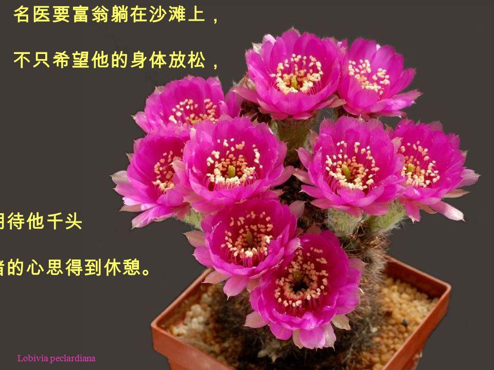 Echinocereus subinermis 故事中的第一帖药,就是休息。