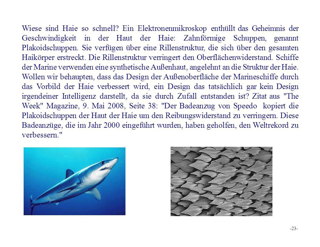 Wiese sind Haie so schnell.