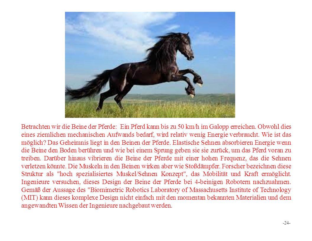 Betrachten wir die Beine der Pferde: Ein Pferd kann bis zu 50 km/h im Galopp erreichen.