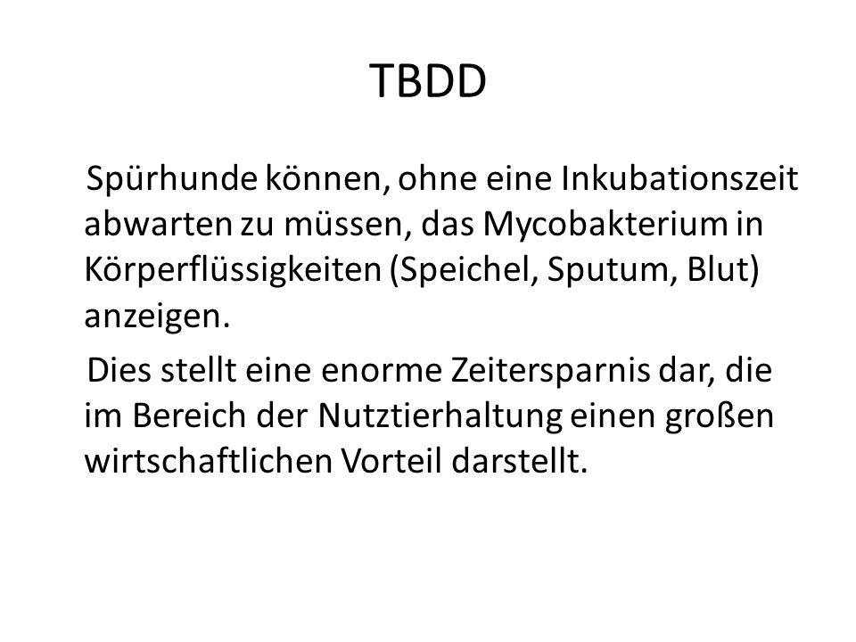 TBDD Spürhunde können, ohne eine Inkubationszeit abwarten zu müssen, das Mycobakterium in Körperflüssigkeiten (Speichel, Sputum, Blut) anzeigen. Dies