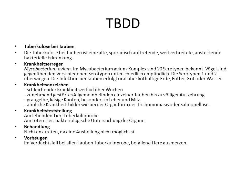 TBDD Tuberkulose bei Tauben Die Tuberkulose bei Tauben ist eine alte, sporadisch auftretende, weitverbreitete, ansteckende bakterielle Erkrankung. Kra