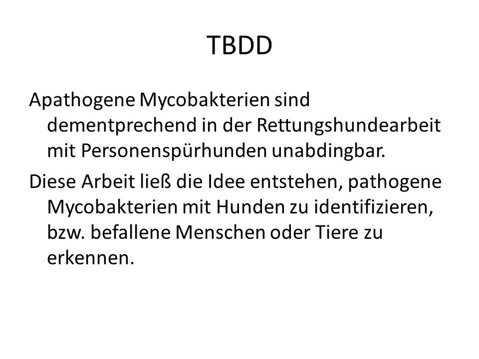 TBDD Apathogene Mycobakterien sind dementprechend in der Rettungshundearbeit mit Personenspürhunden unabdingbar. Diese Arbeit ließ die Idee entstehen,
