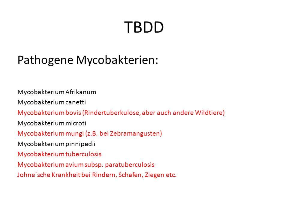 TBDD Pathogene Mycobakterien: Mycobakterium Afrikanum Mycobakterium canetti Mycobakterium bovis (Rindertuberkulose, aber auch andere Wildtiere) Mycoba