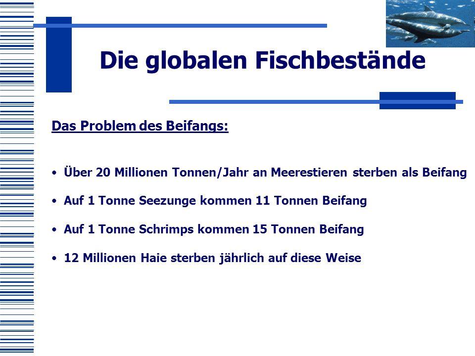 Das Problem des Beifangs: Über 20 Millionen Tonnen/Jahr an Meerestieren sterben als Beifang Auf 1 Tonne Seezunge kommen 11 Tonnen Beifang Auf 1 Tonne