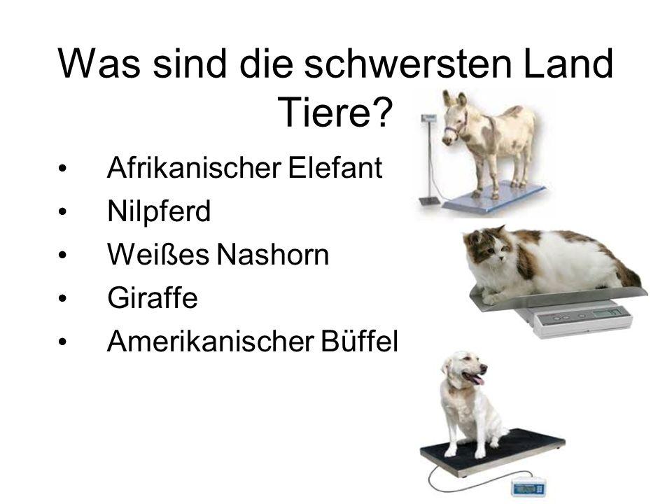 Was sind die schwersten Land Tiere.
