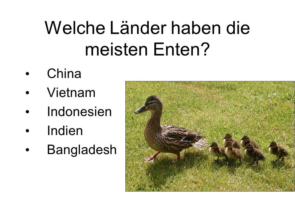 Welche Länder haben die meisten Enten? China Vietnam Indonesien Indien Bangladesh