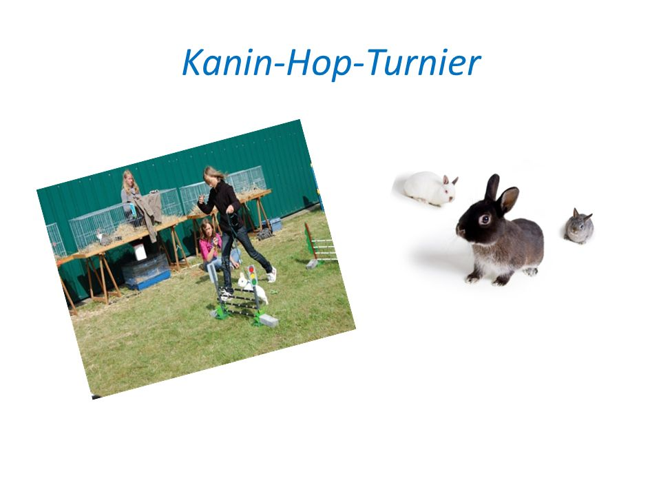 Kanin-Hop-Turnier