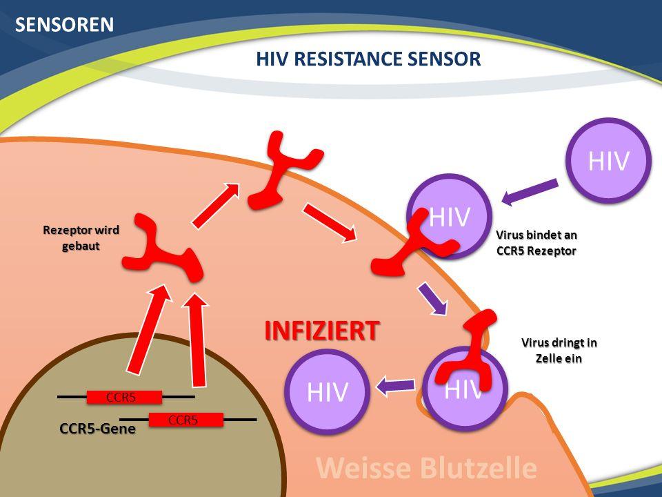 SENSOREN HIV RESISTANCE SENSOR CCR5-Gene Virus dringt in Zelle ein Rezeptor wird gebaut Weisse Blutzelle CCR5 HIV Virus bindet an CCR5 Rezeptor HIV INFIZIERT CCR5