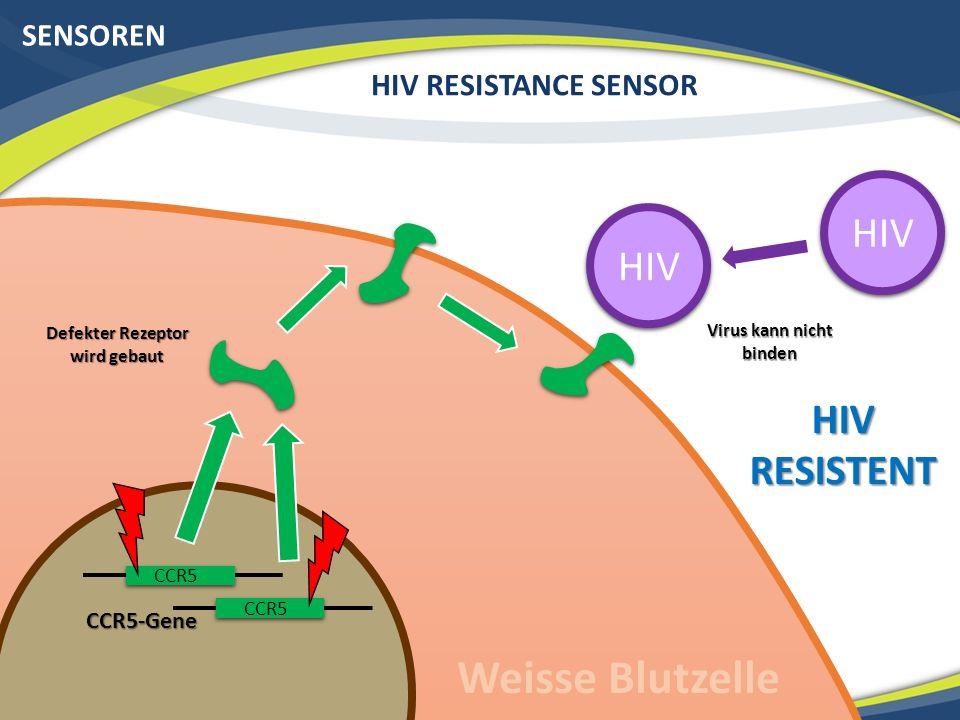 SENSOREN HIV RESISTANCE SENSOR Rezeptor präsentiert Bakterienproteine Defekter Rezeptor wird gebaut HIV Virus kann nicht binden HIV RESISTENT Weisse Blutzelle CCR5-Gene CCR5