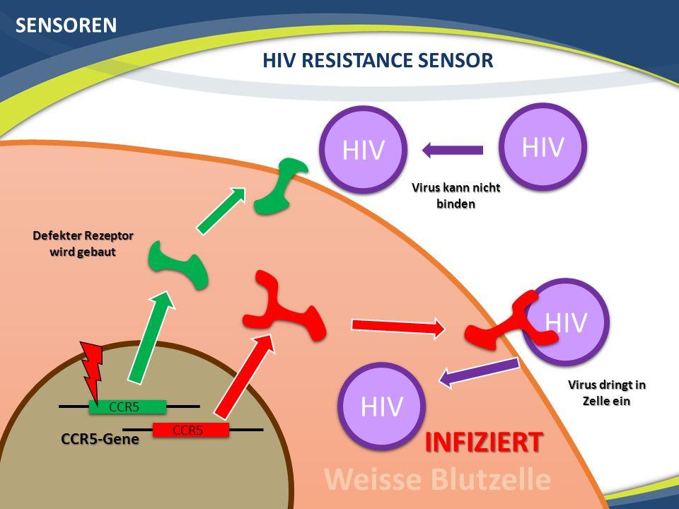 HIV SENSOREN HIV RESISTANCE SENSOR Rezeptor präsentiert Bakterienproteine Defekter Rezeptor wird gebaut HIV Virus kann nicht binden Weisse Blutzelle CCR5-Gene CCR5 HIV INFIZIERT Virus dringt in Zelle ein