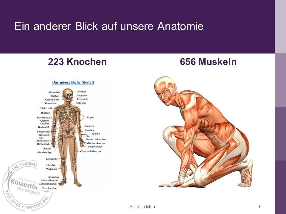 Ein anderer Blick auf unsere Anatomie 223 Knochen656 Muskeln Andrea Mora6