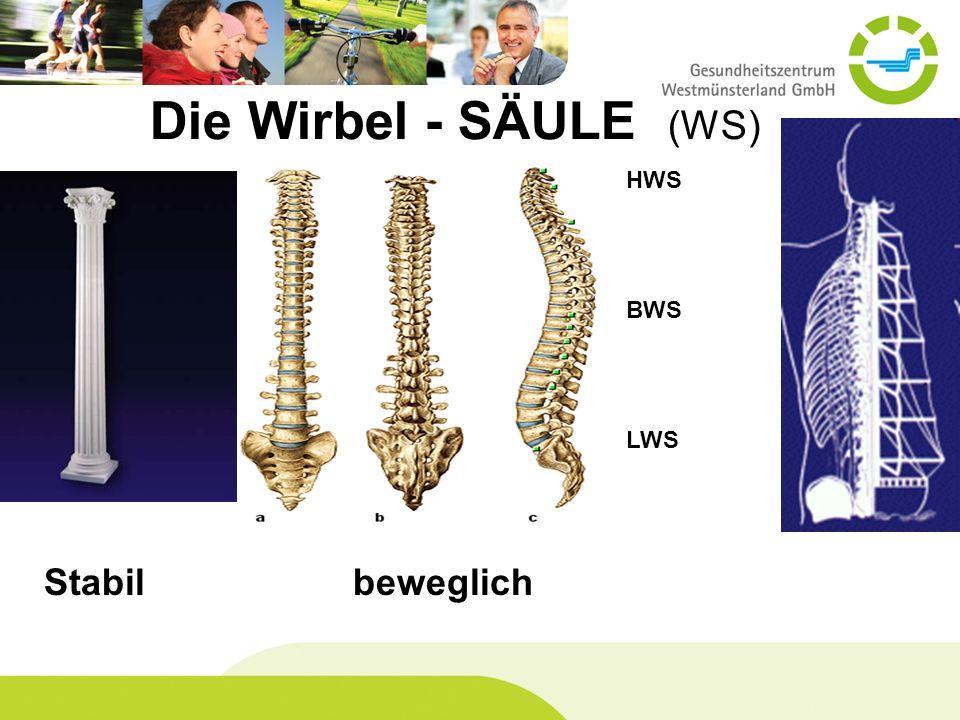 HWS BWS LWS Stabil beweglich Die Wirbel - SÄULE (WS)
