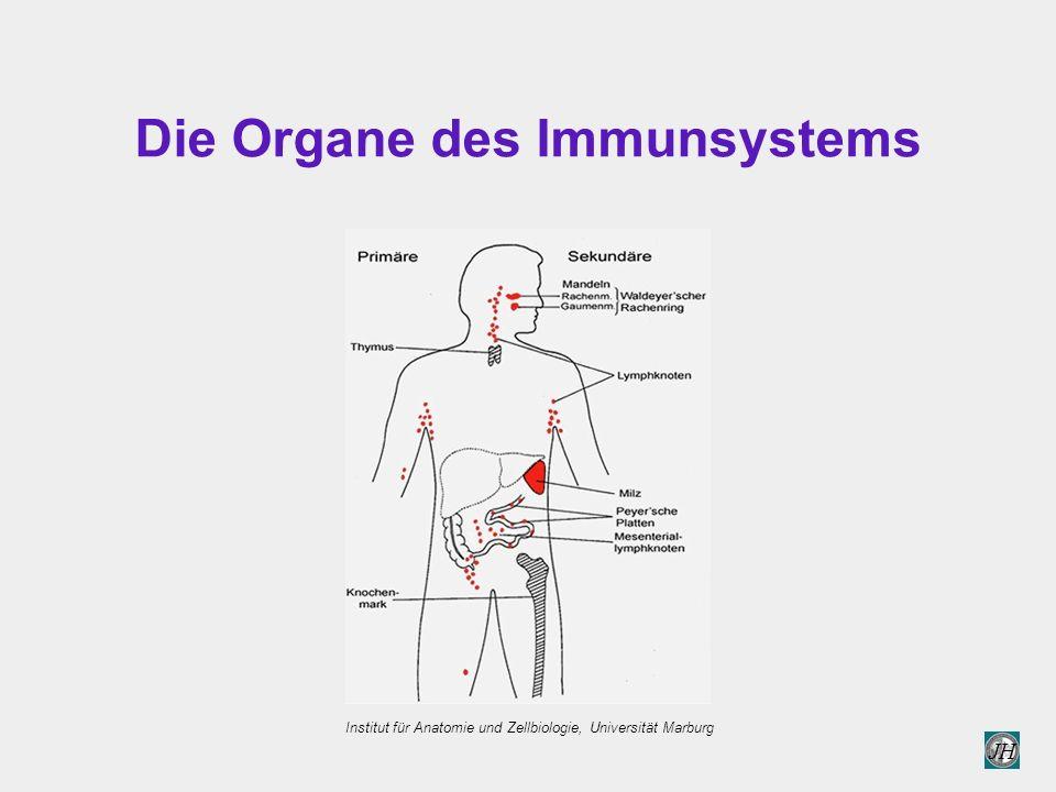 JH Die Organe des Immunsystems Institut für Anatomie und Zellbiologie, Universität Marburg