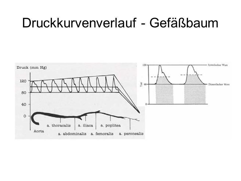 Druckkurvenverlauf - Gefäßbaum