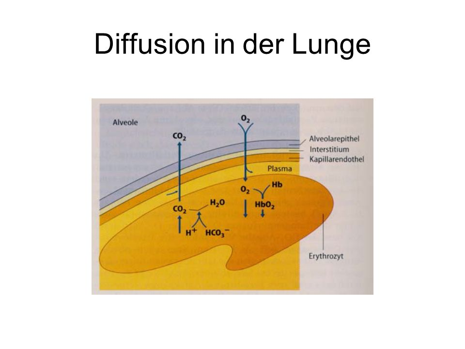 Diffusion in der Lunge