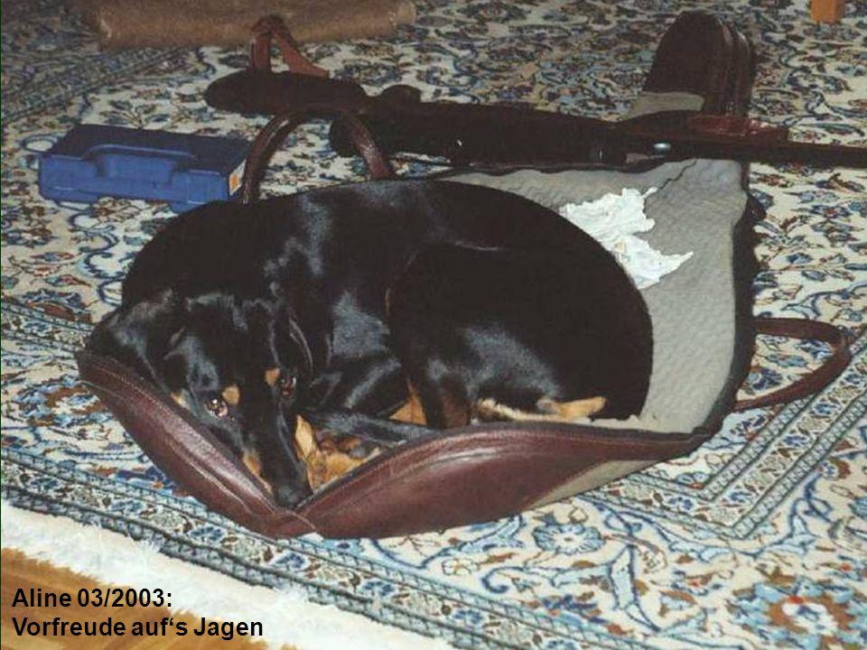 """""""Holzarbeiter ist Aline's zweiter Nebenberuf 02/2007"""