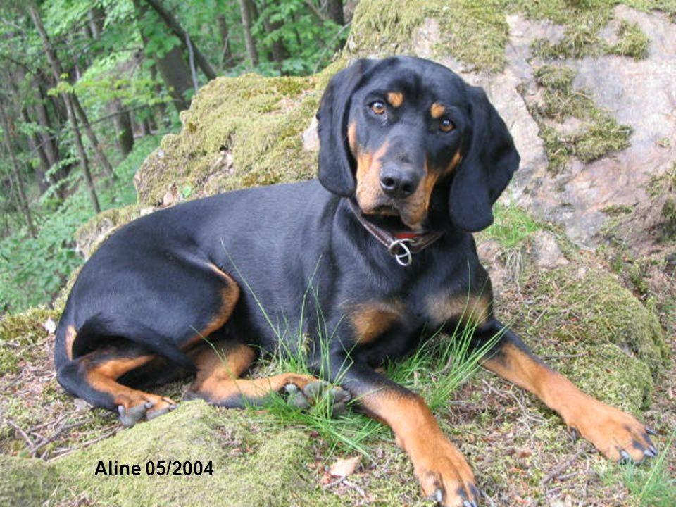 Aline's erste Riegeljagd - mit Jagderfolg 01/2004