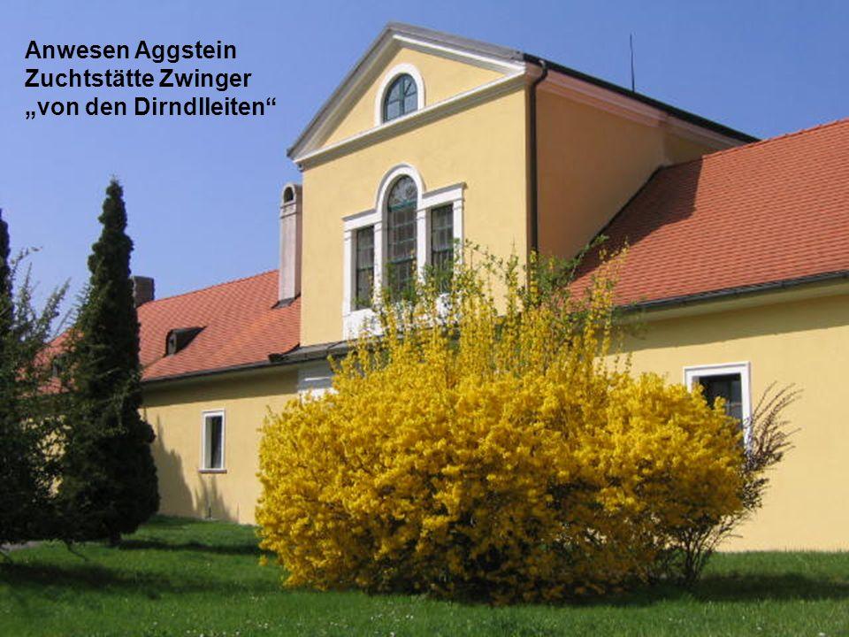 Dirndl-Blüte im Revier Aggstein oberhalb der Donau 04/2006