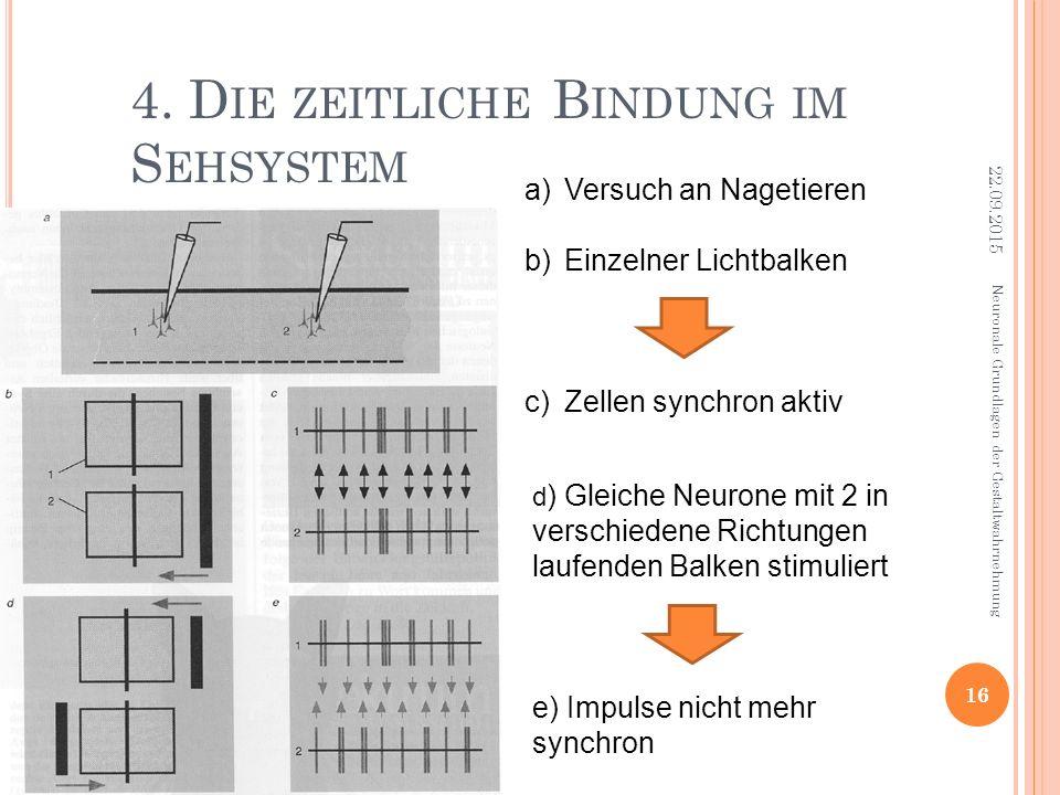 4. D IE ZEITLICHE B INDUNG IM S EHSYSTEM a)Versuch an Nagetieren b)Einzelner Lichtbalken c)Zellen synchron aktiv d ) Gleiche Neurone mit 2 in verschie