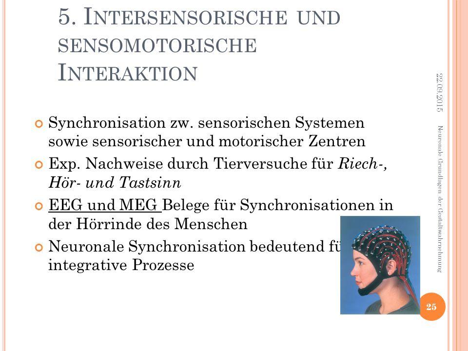 5. I NTERSENSORISCHE UND SENSOMOTORISCHE I NTERAKTION Synchronisation zw. sensorischen Systemen sowie sensorischer und motorischer Zentren Exp. Nachwe