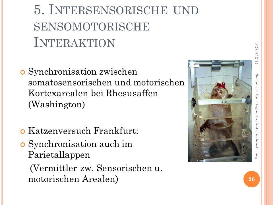 5. I NTERSENSORISCHE UND SENSOMOTORISCHE I NTERAKTION Synchronisation zwischen somatosensorischen und motorischen Kortexarealen bei Rhesusaffen (Washi