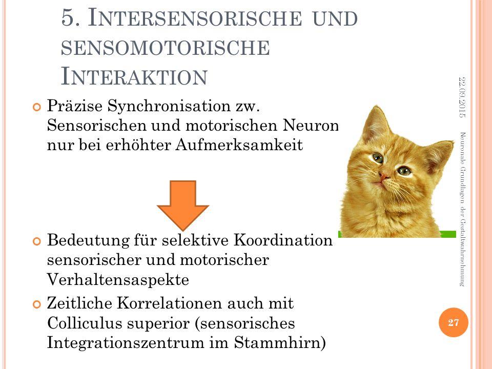 5. I NTERSENSORISCHE UND SENSOMOTORISCHE I NTERAKTION Präzise Synchronisation zw. Sensorischen und motorischen Neurone nur bei erhöhter Aufmerksamkeit