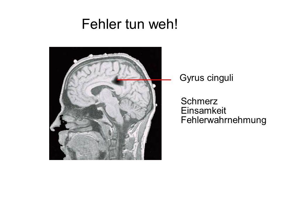 Fehler tun weh! Schmerz Gyrus cinguli Einsamkeit Fehlerwahrnehmung