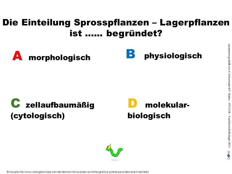 zusammengestellt von A. Schermaier & P. Starke – PH OOE – Fachbereich Biologie 2012 Die Einteilung Sprosspflanzen – Lagerpflanzen ist …... begründet?