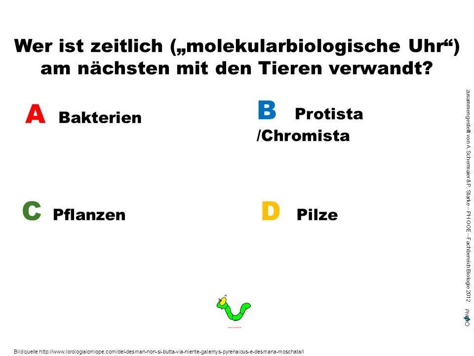 """zusammengestellt von A. Schermaier & P. Starke – PH OOE – Fachbereich Biologie 2012 Wer ist zeitlich (""""molekularbiologische Uhr"""") am nächsten mit den"""