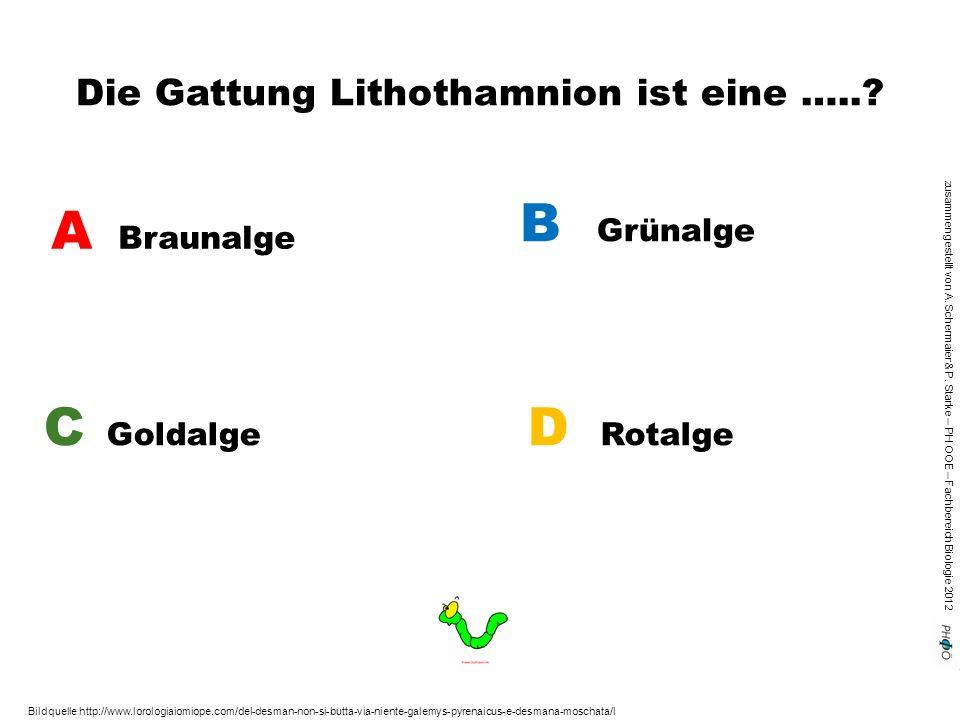 zusammengestellt von A. Schermaier & P. Starke – PH OOE – Fachbereich Biologie 2012 Die Gattung Lithothamnion ist eine …..? A Braunalge B Grünalge C G