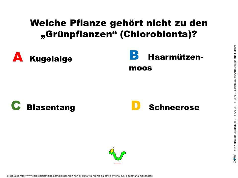 """zusammengestellt von A. Schermaier & P. Starke – PH OOE – Fachbereich Biologie 2012 Welche Pflanze gehört nicht zu den """"Grünpflanzen"""" (Chlorobionta)?"""