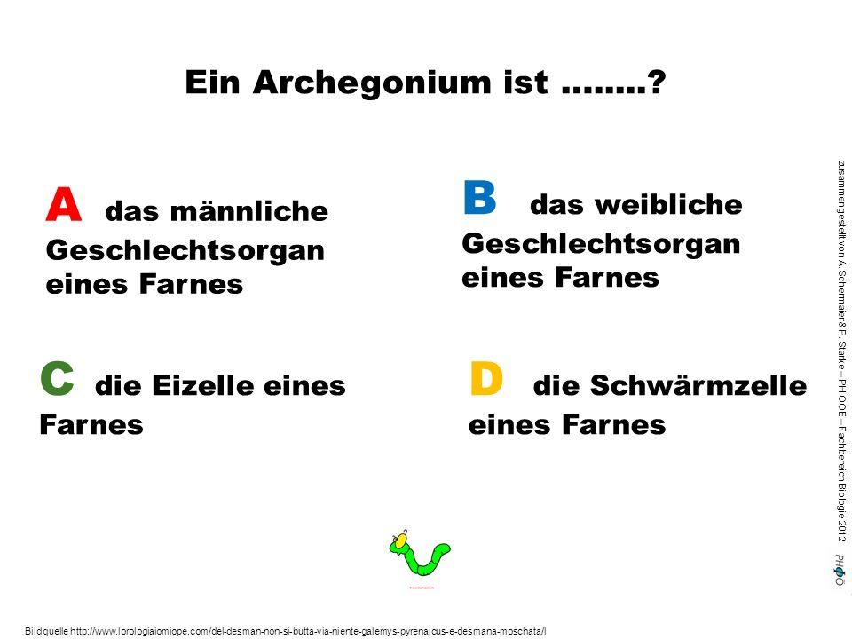 zusammengestellt von A. Schermaier & P. Starke – PH OOE – Fachbereich Biologie 2012 Ein Archegonium ist ….....? A das männliche Geschlechtsorgan eines