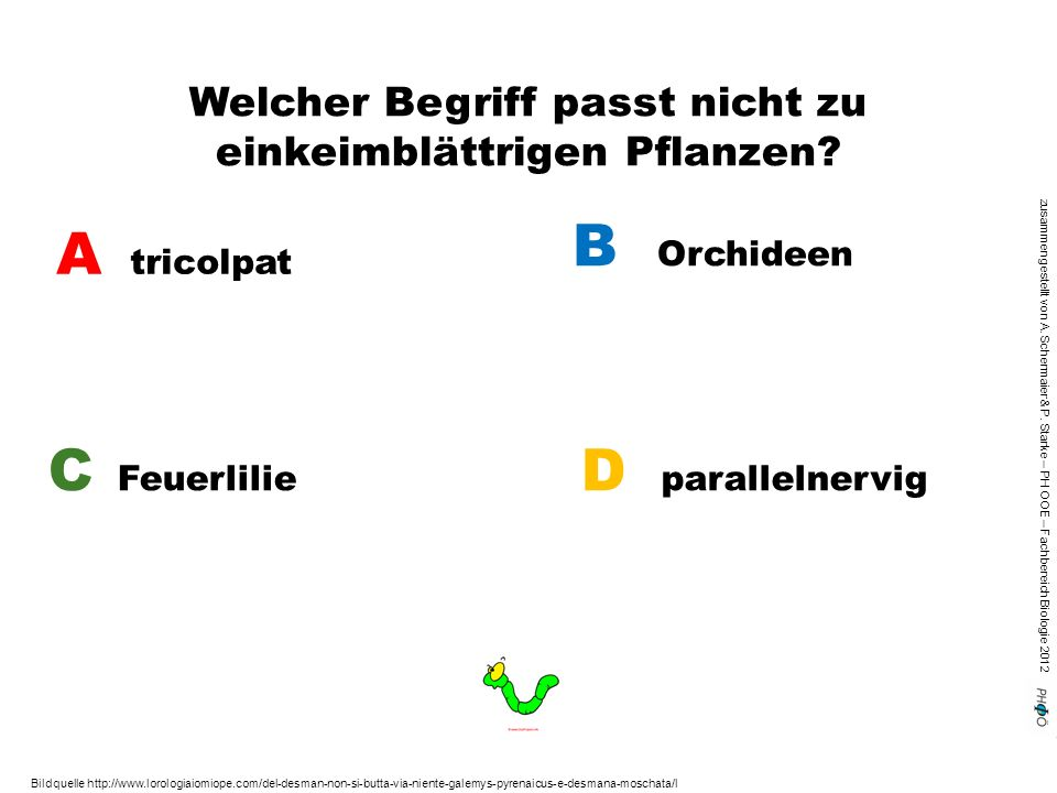 zusammengestellt von A. Schermaier & P. Starke – PH OOE – Fachbereich Biologie 2012 Welcher Begriff passt nicht zu einkeimblättrigen Pflanzen? A trico