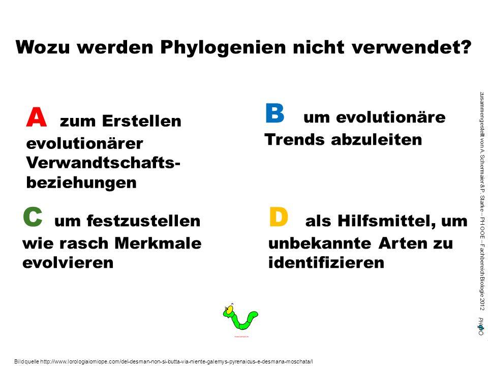 zusammengestellt von A. Schermaier & P. Starke – PH OOE – Fachbereich Biologie 2012 Wozu werden Phylogenien nicht verwendet? A zum Erstellen evolution