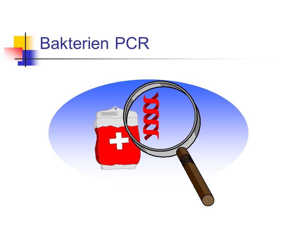 Bakterien PCR