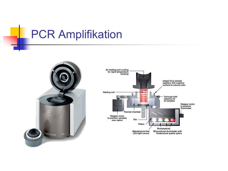 PCR Amplifikation