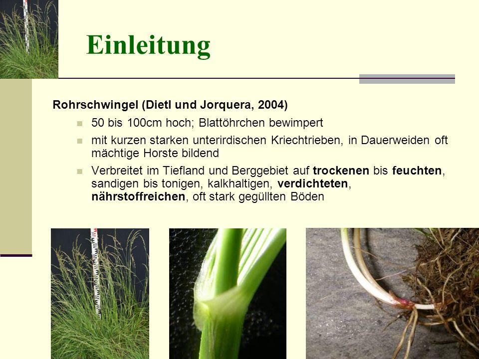 Einleitung Rohrschwingel (Dietl und Jorquera, 2004) 50 bis 100cm hoch; Blattöhrchen bewimpert mit kurzen starken unterirdischen Kriechtrieben, in Daue