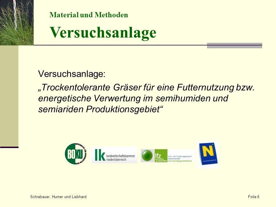 """Versuchsanlage: """"Trockentolerante Gräser für eine Futternutzung bzw."""