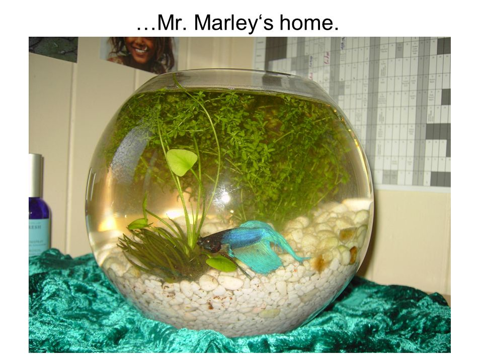 …Mr. Marley's home.
