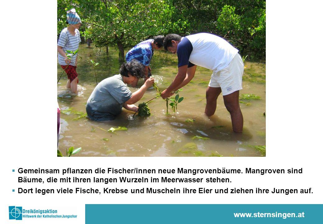 www.sternsingen.at  Gemeinsam pflanzen die Fischer/innen neue Mangrovenbäume.