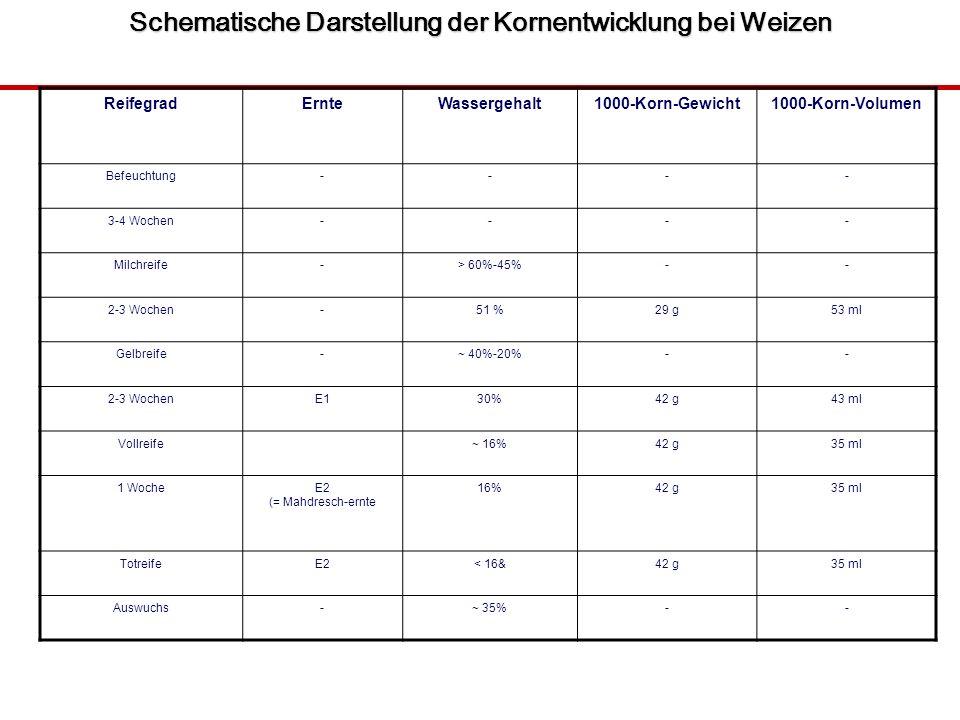 Schematische Darstellung der Kornentwicklung bei Weizen ReifegradErnteWassergehalt1000-Korn-Gewicht1000-Korn-Volumen Befeuchtung---- 3-4 Wochen---- Milchreife-> 60%-45%-- 2-3 Wochen-51 %29 g53 ml Gelbreife-~ 40%-20%-- 2-3 WochenE130%42 g43 ml Vollreife~ 16%42 g35 ml 1 WocheE2 (= Mahdresch-ernte 16%42 g35 ml TotreifeE2< 16&42 g35 ml Auswuchs-~ 35%--