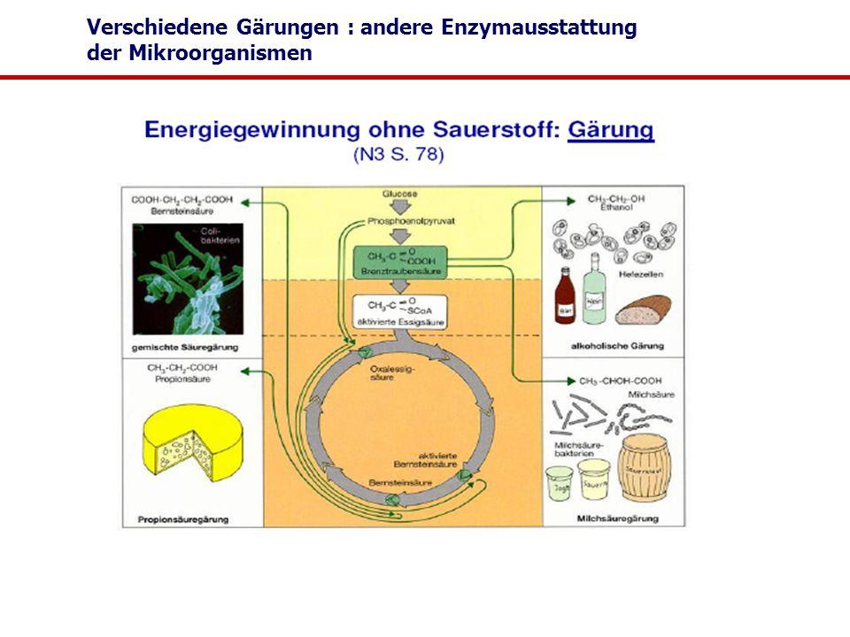 Verschiedene Gärungen : andere Enzymausstattung der Mikroorganismen