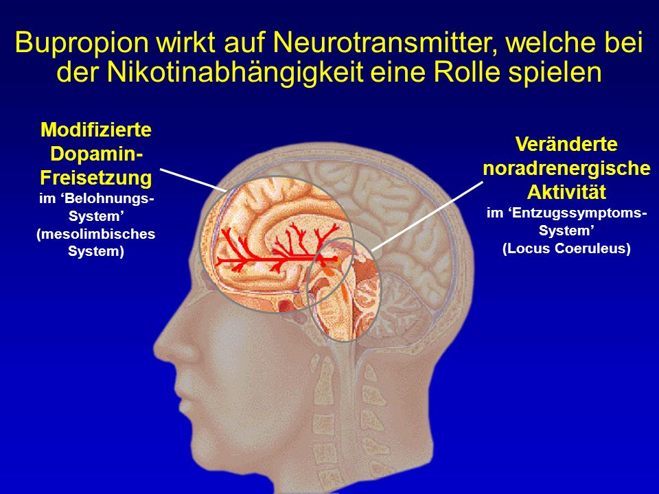 Bupropion wirkt auf Neurotransmitter, welche bei der Nikotinabhängigkeit eine Rolle spielen Modifizierte Dopamin- Freisetzung im 'Belohnungs- System'