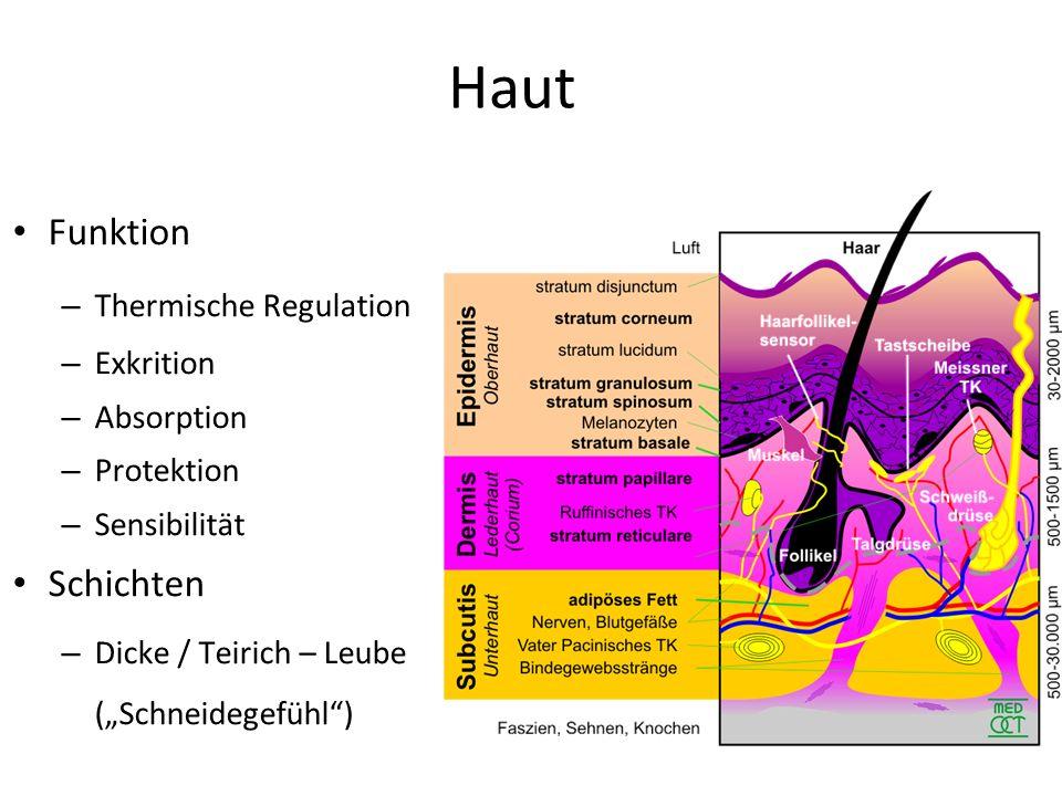 """Haut Funktion – Thermische Regulation – Exkrition – Absorption – Protektion – Sensibilität Schichten – Dicke / Teirich – Leube (""""Schneidegefühl"""")"""