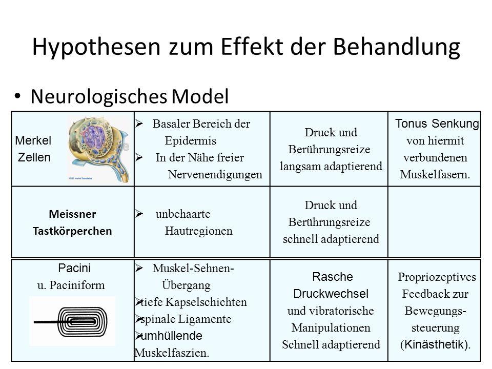 Hypothesen zum Effekt der Behandlung Neurologisches Model Merkel Zellen  Basaler Bereich der Epidermis  In der Nähe freier Nervenendigungen Druck un