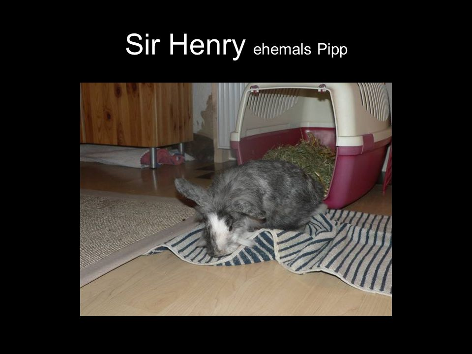 Sir Henry ehemals Pipp