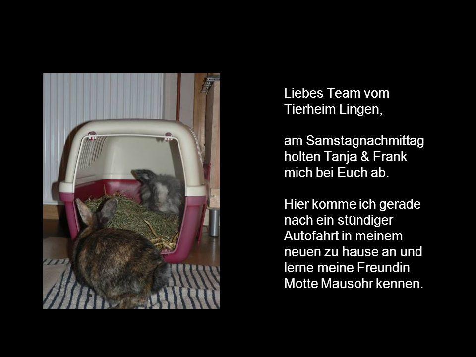Liebes Team vom Tierheim Lingen, am Samstagnachmittag holten Tanja & Frank mich bei Euch ab. Hier komme ich gerade nach ein stündiger Autofahrt in mei